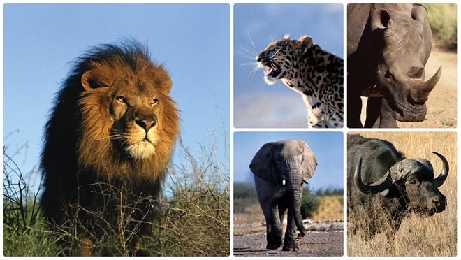 Sabi Sand Game Reserve - The Big Five